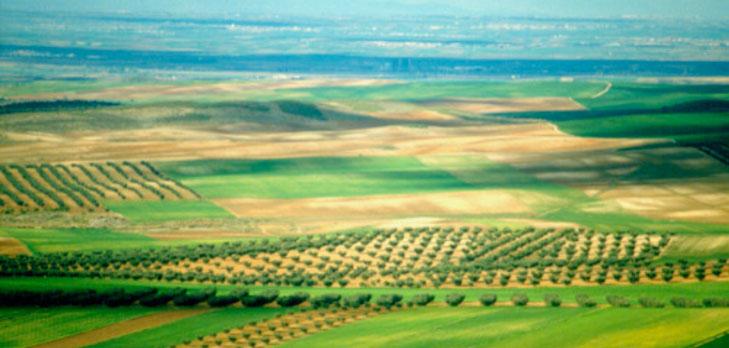 LIFE+ Crops for Better Soil, LIFE+ Crops for Better Soil