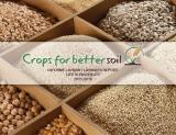 Laymans Report Crops for Better Soil